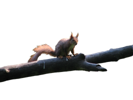 squirrel PNG by Pagan-Stock