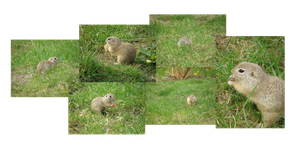 Ground squirrel by MAKY-OREL