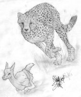 Big-Cats-Club Hunting Contest by HeavenlyCondemned