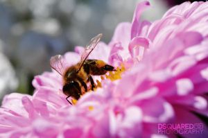 Macro Bee by dsquaredgfx