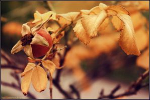 Autumn color by AndrielTaro