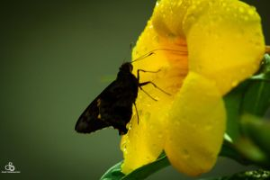 Butterfly and her flower by DraconPhotography