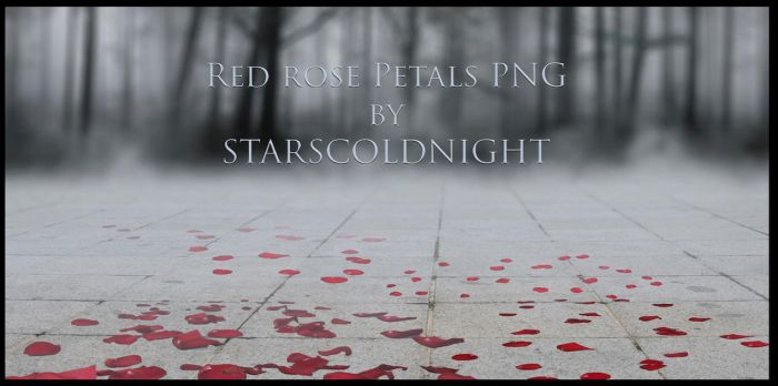 Red rose Petals III PNG by Starscoldnight by StarsColdNight