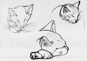 Sketch ink cat head by Draconica5