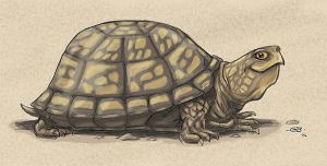 Turtle Smile by GarrettByers