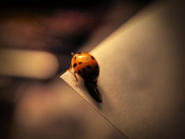 The Last Ladybug by Rastavari