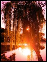 Sunlight behind a weeping willow by cortomaltese219