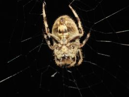 the underside of a spider by Drake-Raine13