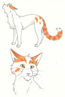 Copperpaw by CaptainMorwen