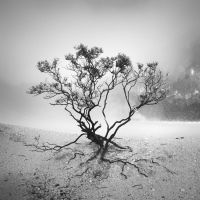tree 53 by Hengki24