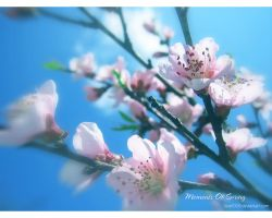 Moments of Spring 5 by love1008