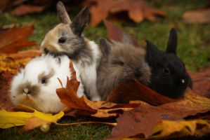 Fall Bunnies by FrancesColt