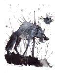 And the wolf burst by spocha