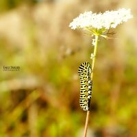Chenille by EmilieDurand