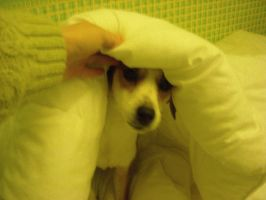 daisy in the duvet by loobyloukitty