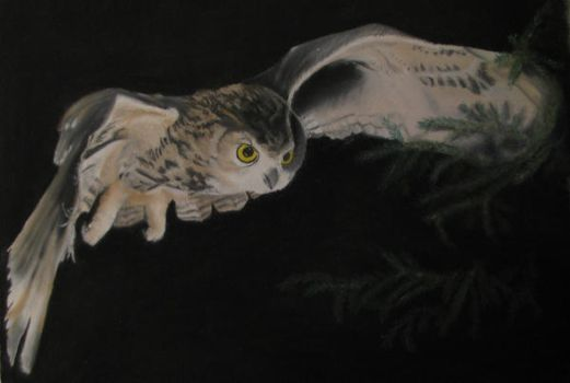 Owl by Satinah