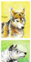 Speedwell Wolves by whitewolf61084