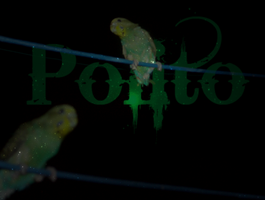Polito Wallpaper 2 by darknes2012