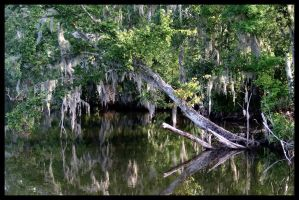 Reflections of a Mossy Bayou by SalemCat