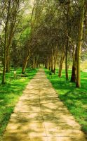 The Acacia Path by AndrewAndrawes