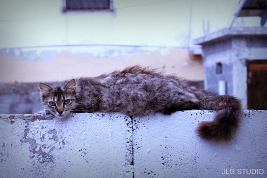 Cat resting on a fence by joseluis-garcia