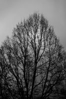 Behind the branches by luka567