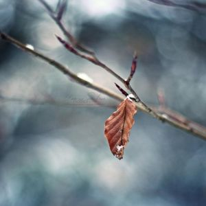 Touch of Winter by IndigoSummerr