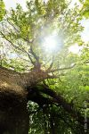 Branches of life. by eriksimonic