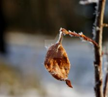 last leaf. by paraeidolon