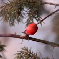 Lady In Red by HegeKristin25