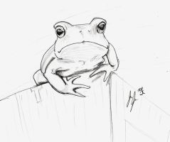 tiny froggy by jEROMEaNIMATIONS