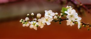 Primavera - 3 by Nataly1st