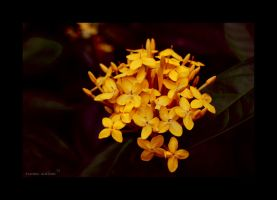 Yellow by Saher4ever