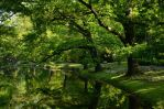 The Green World by Luin-Tinuviel