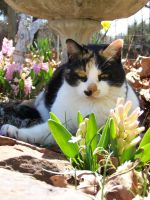 Calico in the Flowers03 by effing-stock