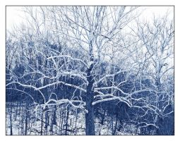 Stark tree, blue.L1030063 by harrietsfriend