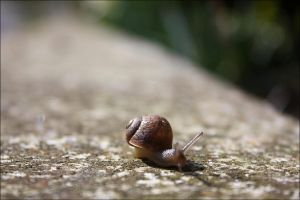 Run run baby snail by Lun-Hiks