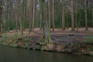 trees by the local canal by rainbowphotos