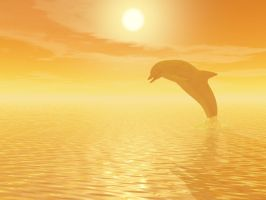 Dolphin dancing in the sun by DarkRiderDLMC