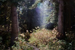 Spirit of the Forest by CharlieA-Photos