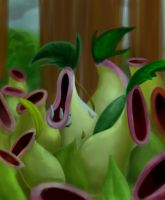 Pitcher Plant by Caelann