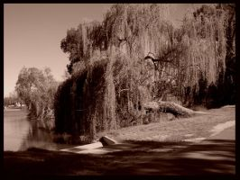 Weeping Willow by SilkenWebs
