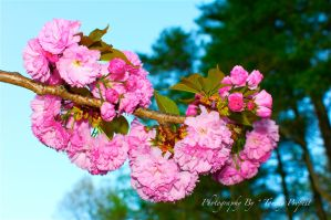Blooms From Above 0355 by TommyPropest-Candler