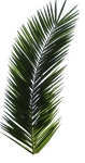 Palm Tree Tube Stock VI PNG by digitaltwist