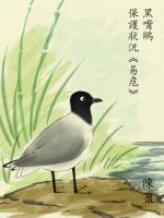 EA Project 5: Saunders's Gull by meihua