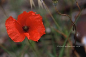 Poppy by SimplyVero
