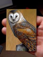 Barn Owl ACEO Art Card Original painting by D-E-V-I-A-N-T-A-R-T