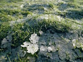 icy grass by harrietbaxter