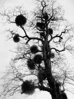 Ink Tree 4 by Noj-Mobo