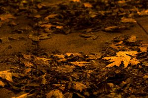 Autumn Leaves by Shilvar